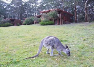 Jenolan Caves Cottages - Hervey Bay Accommodation