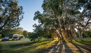 Delicate campground - Hervey Bay Accommodation
