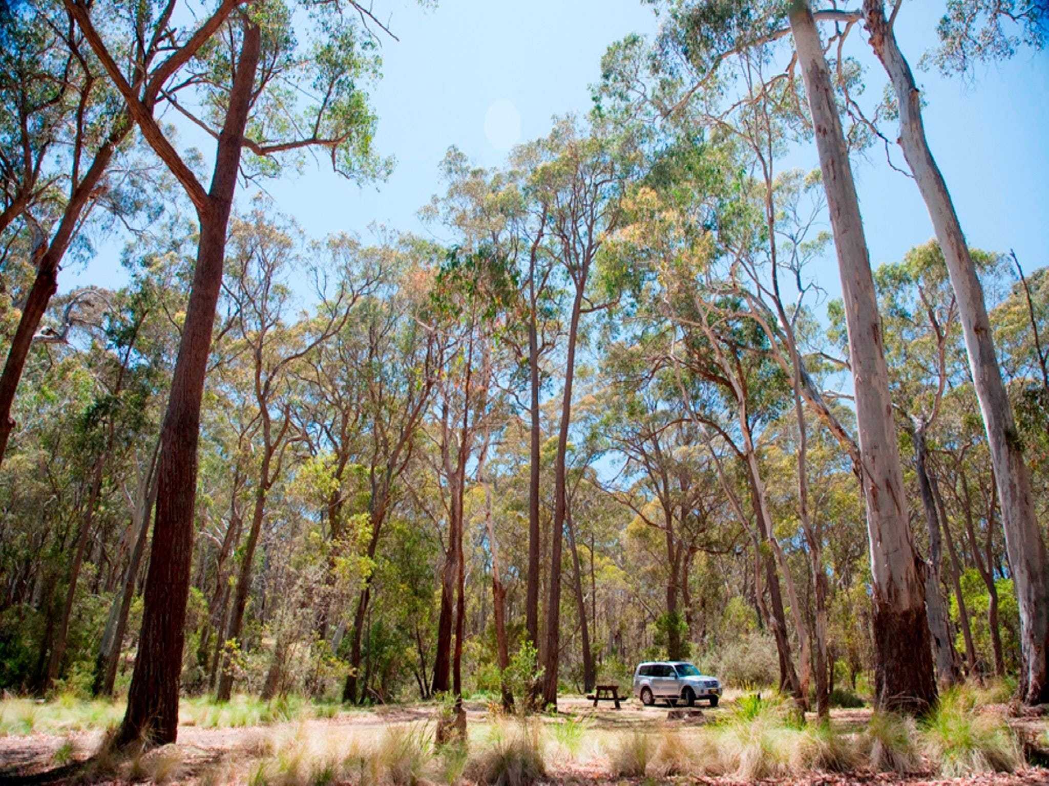 Coolah Tops National Park Camping - Hervey Bay Accommodation