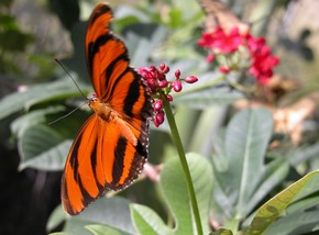 Butterfly Farm - Hervey Bay Accommodation