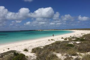 Abrolhos Island Half Day Fly and Flipper - Hervey Bay Accommodation