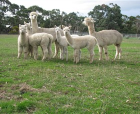 Blackgate Lodge Alpaca Stud - Hervey Bay Accommodation