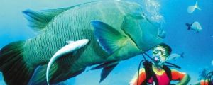 Aristocat Snorkel and Scuba Port Douglas - Hervey Bay Accommodation