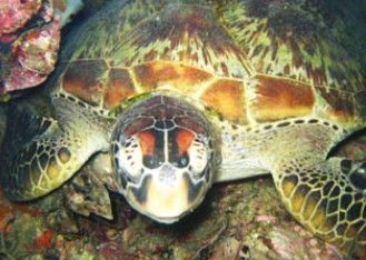 Adrenalin Snorkel and Dive - Hervey Bay Accommodation
