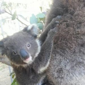 West Oz Wildlife Petting Zoos - Hervey Bay Accommodation